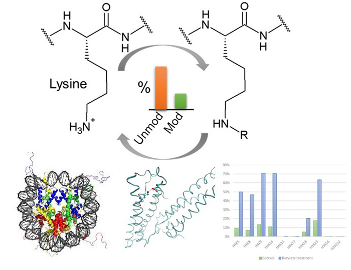 Quantitative proteomics technology to study lysine modification pathways