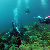 Three students in scuba gear diving underwater