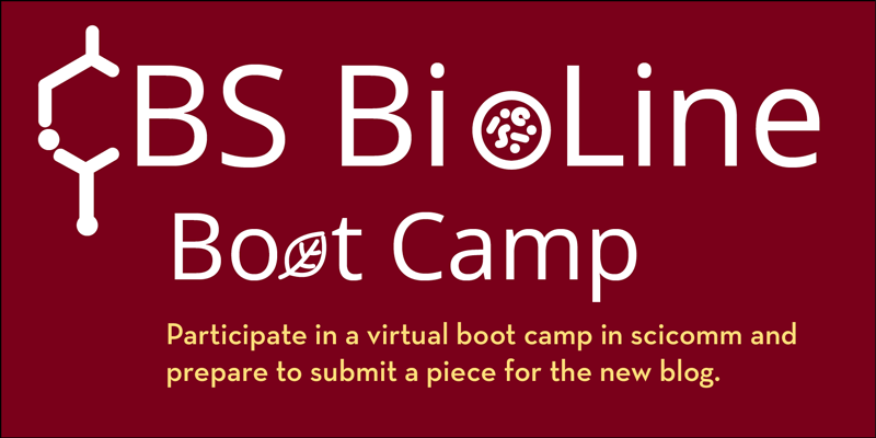 "White words ""BioLine bootcamp"" against a maroon background. The first ""o"" is in the shape of a petri dish and the second ""o"" is shaped like a leaf. Words below are yellow, ""Participate in a virtual boot camp in scicomm and prepare to submit a piece."""