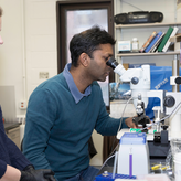 BMBB graduate students work in the lab
