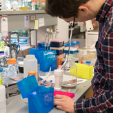 BMBB graduate student works in the lab