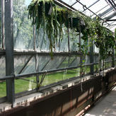 Epiphytic plants in the north hall