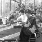 Pharmacy Greenhouse. Mpls. Campus. Women students transplanting seedlings in the Medicinal Plant Laboratory, 1914